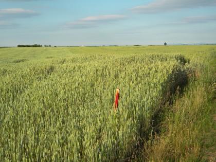 DEZVĂLUIRI/ Terenuri agricole românesti, furate, au ajuns în proprietatea Rabobank