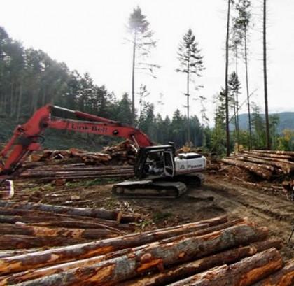 """Premierul Cioloș: """"Tăierile ilegale de pădure sunt o problemă de siguranță națională"""". Apel la români, SĂ SE IMPLICE"""