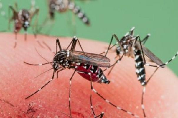 ALERTĂ! Feriți-vă de ȚÂNȚARI! Virusul West Nile, care poate provoca MOARTEA, confirmat în România