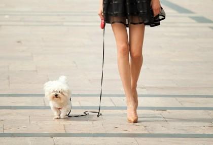 Amenzi mai mici pentru proprietarii de câini