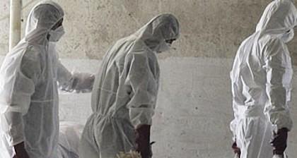 BREAKING NEWS/ Autorităţile, în ALERTĂ: Focar de PESTĂ PORCINĂ AFRICANĂ la Arad! A fost dispusă SACRIFICAREA a zeci de animale