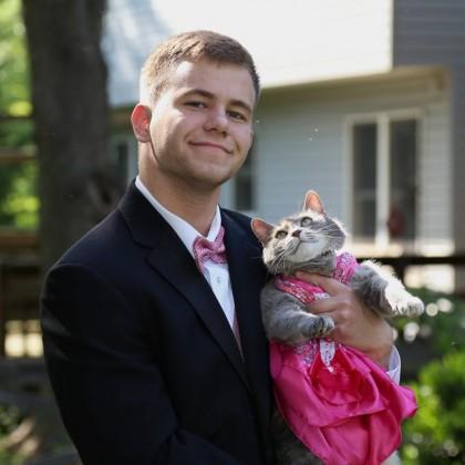 banchet pisică