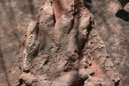 fosilă