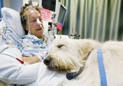 INEDIT/ Spitalul care PERMITE pacienţilor să primească VIZITA ANIMALELOR de companie