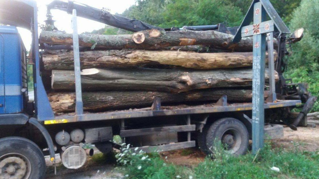 Polițiștii au CONFISCAT opt camioane cu lemne