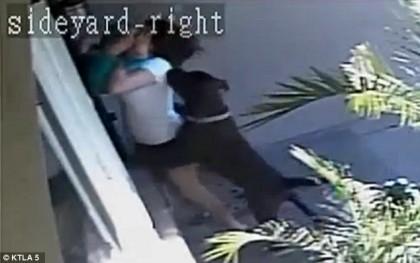 ȘOCANT! O mamă se CHINUIE să își SALVEZE COPILUL din GHEARELE CÂINILOR (VIDEO)