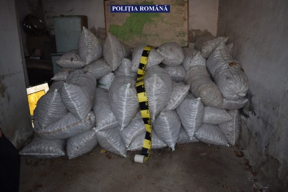 Cantitate URIAȘĂ de NUCI, confiscată de polițiștii arădeni