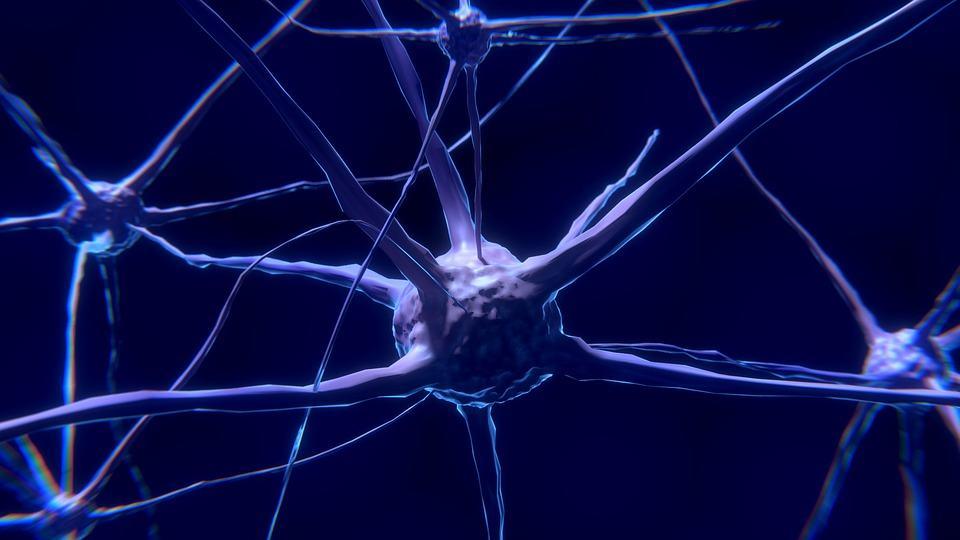 Ce sunt NEURONII-OGLINDĂ și cum îți influențează viața