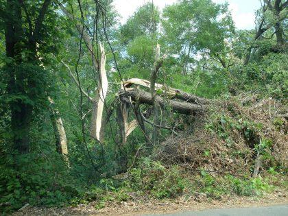 Pădurea Ceala DEVASTATĂ! Încă se văd urmele furtunii de acum câteva săptămâni (GALERIE FOTO)