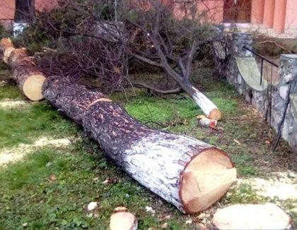 Aproape 200 de copaci din municipiu vor fi TĂIAȚI. Care e planul Primăriei