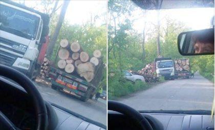 DISPARE Pădurea Ceala!? Camioanele pleacă pline! Ce spune conducerea Parcului Natural (UPDATE)