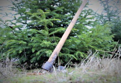 Tăierile ILEGALE din pădurile de stat administrate de ROMSILVA au SCĂZUT, însă numărul agresiunilor împotriva personalului silvic CREȘTE