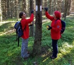 Arădenii iubitori de drumeții sunt invitați la VOPSIT DE MARCAJE pe trei trasee frumoase din munții României