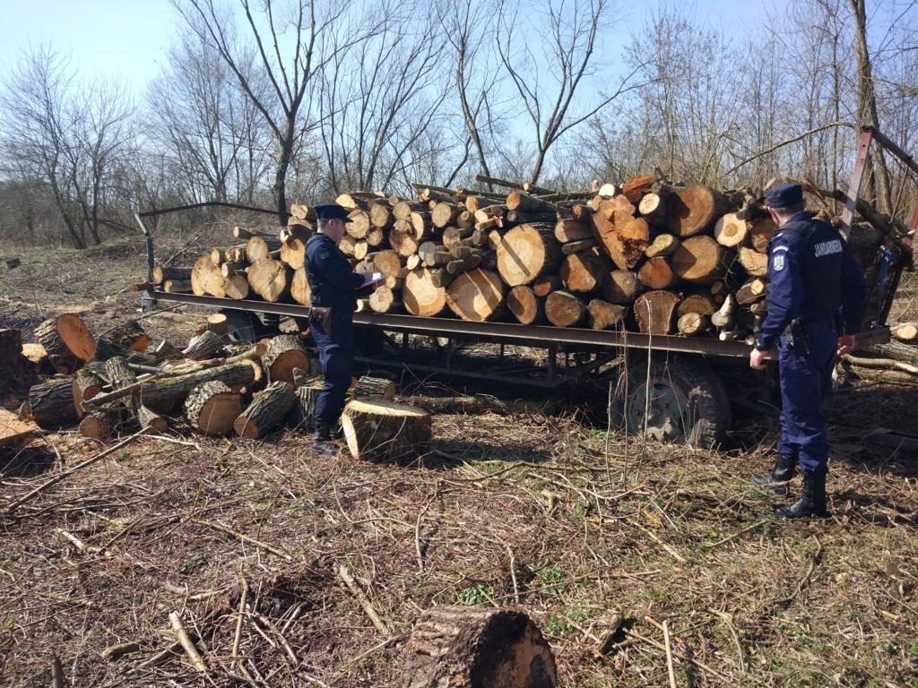 Arbori în valoare de aproape 20.000 de lei, tăiați ilegal dintr-o pădure de la marginea localității Valea Mare