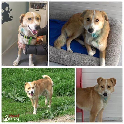 Gest RESPECTABIL! Un câine grav RĂNIT a fost SALVAT de un grup de români