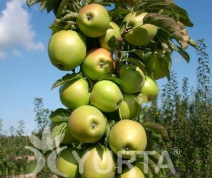 Soluţie pentru grădinari urbani: Pomi fructiferi columnari