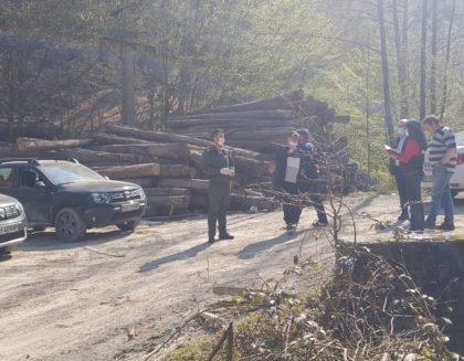 Maramureșenii care EXPLOATEAZĂ pădurile în zona Monesei, ARȘI de Garda de Mediu (FOTO)