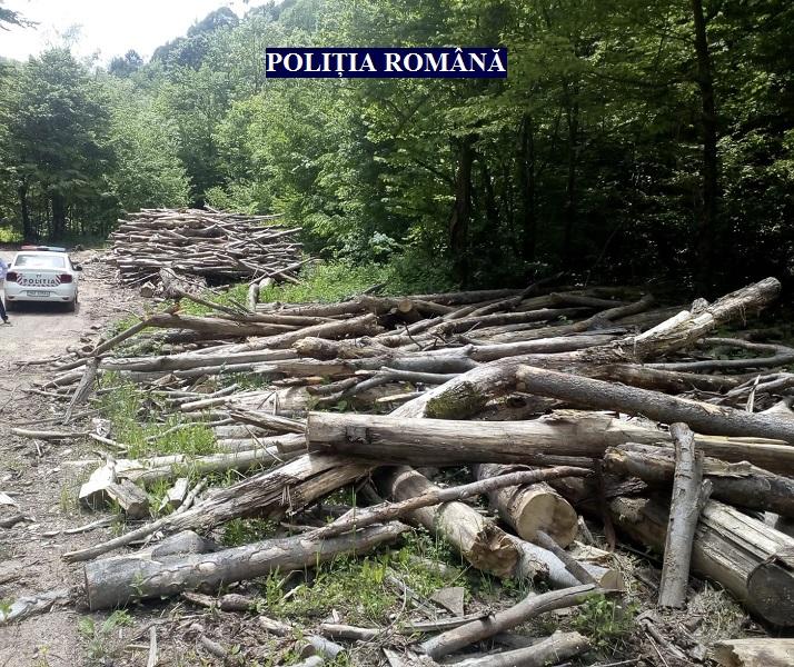 Fals intelectual, uz de fals, tăiere ilegală de arbori şi furt de material lemnos, la un ocol silvic din judeţ