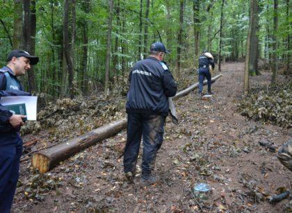 Tun de peste 100.000 de lei într-o pădure din Arad. Au ras 250 de copaci