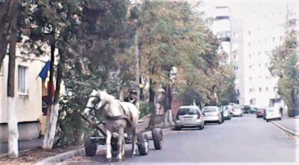 Se întâmplă în Arad: La plimbare, prin oraș, cu căruța și fără mască