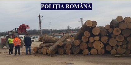 Amenzi de 30.000 de lei pentru firme de EXPLOATAREA lemnului din Sebiș și Cuied