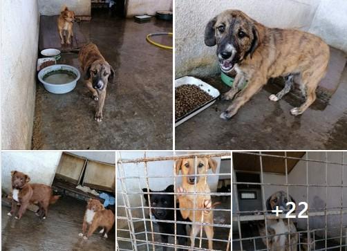 Poliția Animalelor, la adăpostul de câini de pe Calea Bodrogului