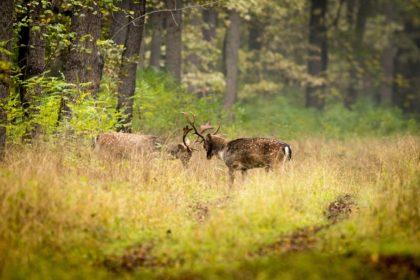 Arădenii, implicați în revizuirea planului de promovare și management al Parcului Natural Lunca Mureșului