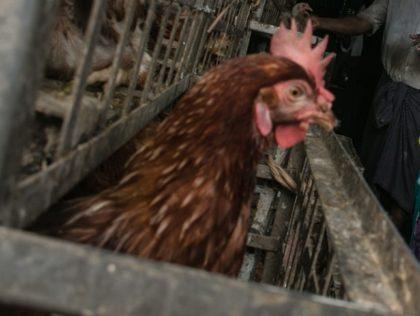 E GRIPĂ AVIARĂ! Vânzarea ambulantă a găinilor, gâștelor și rațelor, INTERZISĂ timp de o lună